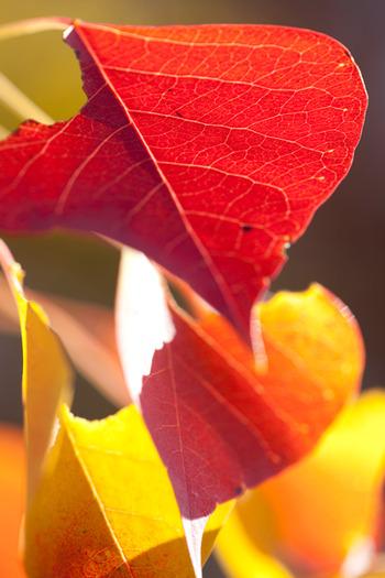 2011_11_26_eos5dm2_02345ak