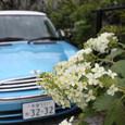 青い車と白い紫陽花