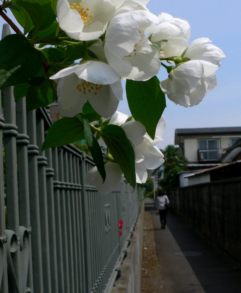 20090521_4