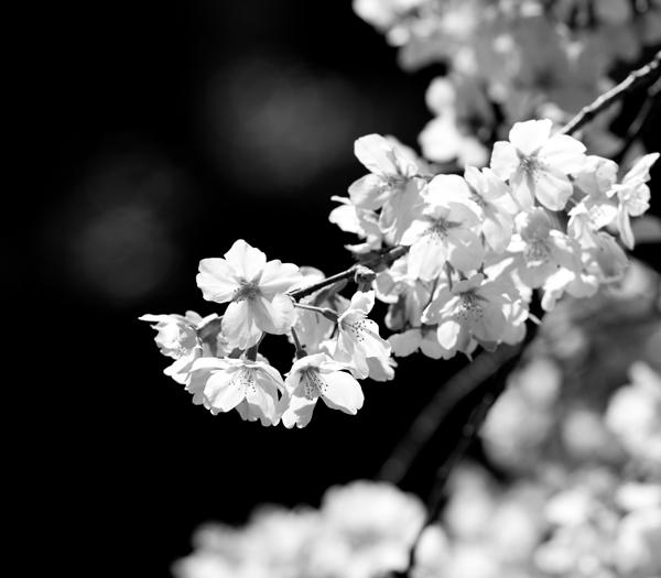 2011_04_05_eos5dm_00074s