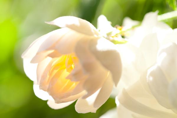 2011_05_24_eos5dm2_00491_2